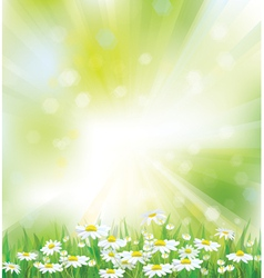 spring background flowers vector image vector image