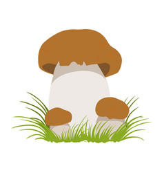boletus autumn cep edible forest mushrooms vector image