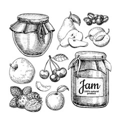 Fruit jam glass jar drawing jelly and vector