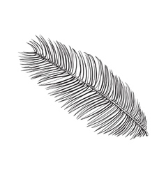 Full fresh leaf of sago palm tree sketch vector image