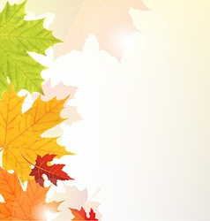 Leaves Border vector image