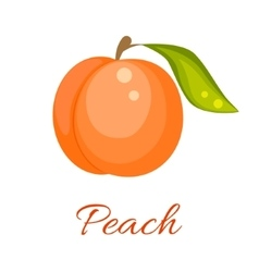 Orange peach icon vector