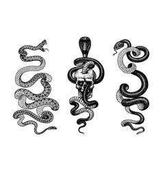 snake in skull indian cobra pit viper vector image
