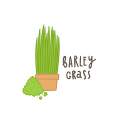 Barley grass superfood vector