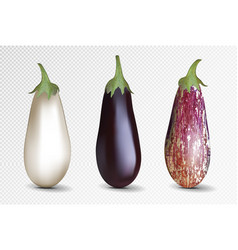 Photo-realistic fresh aubergine on a vector