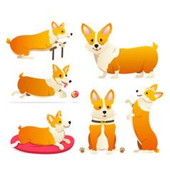 Set cute dogs breed welsh corgi pembroke on vector