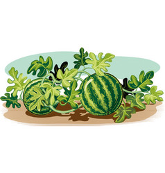 Watermelon plant vector