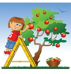 Boy picking apples vector