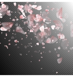 Sakura petals on white background eps 10 vector