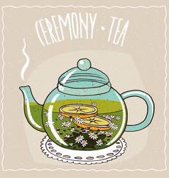 Glass teapot with chamomile tea vector