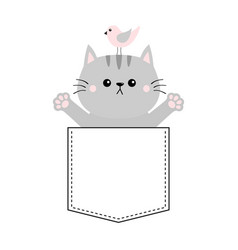gray cat bird in pocket holding hands up give vector image
