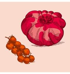 hand drawn retro style red tomato vector image