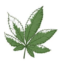 marihuana icon hemp or cannabis herb botanical vector image