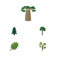 Flat icon nature set of baobab garden park and vector