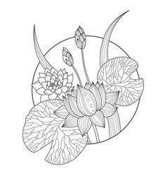 Lotus flower coloring book vector