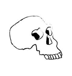 Sketch human skull medicine anatomy vector