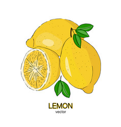 Sketch of fresh lemons vector