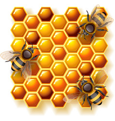 bees and honey vector image vector image