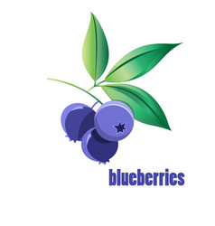 bright blueberries vector image