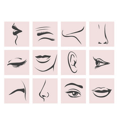 Female head parts set in contour style vector