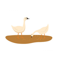 goose on ground animal eating food wheat vector image