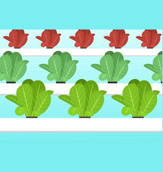 hydroponics plants farm in flat cartoon vector image