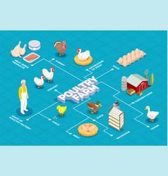 Poultry farm isometric flowchart vector