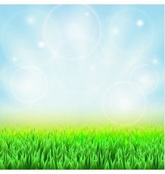 Spring green grass vector image