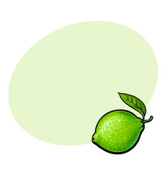 whole shiny ripe green lime with a leaf vector image