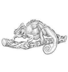 chameleon lizard sitting on tree vector image