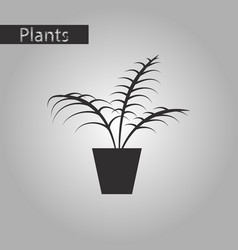 Black and white style icon ficus vector