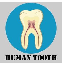 Human tooth emblem vector image