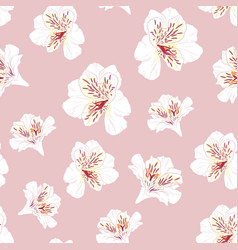 pattern with beautiful pink and white alstroemeria vector image