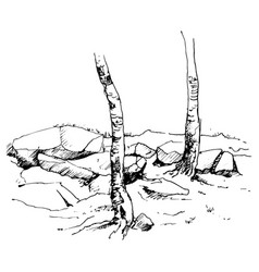 sketch of tree trunks and rocks vector image