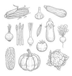 Vegetables or veggies harvest sketch icons vector