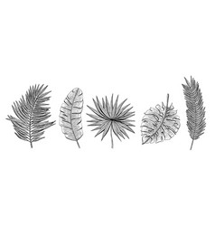 hand drawn set with tropical leaves chamaerops vector image