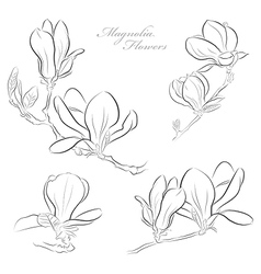 Magnolia flowers vector image