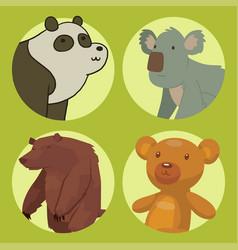 bear animal mammal teddy grizzly funny vector image vector image