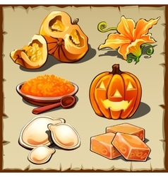 Set of pumpkin cereals seeds and other food vector image vector image