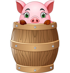cartoon little pig in barrel vector image