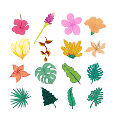 Decorative tropical flower and leaves hand drawn vector