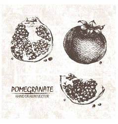 Digital detailed pomegranate hand drawn vector