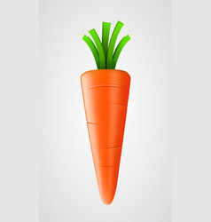 fresh carrot isolated on white vector image