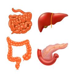 Internal organs icon set vector