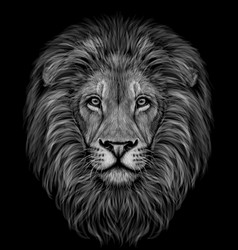lion black and white realistic graphic portrait vector image