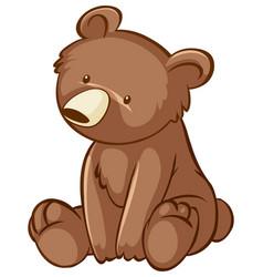 little bear on white background vector image