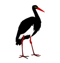 Silhouette of a Grus vector