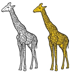 Sketch of high African giraffe on a white vector image