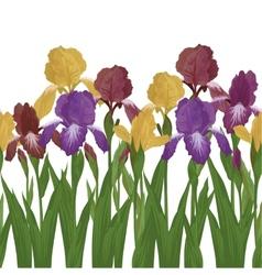 Flowers iris seamless vector image
