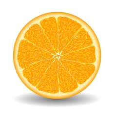oranges slice over white vector image vector image